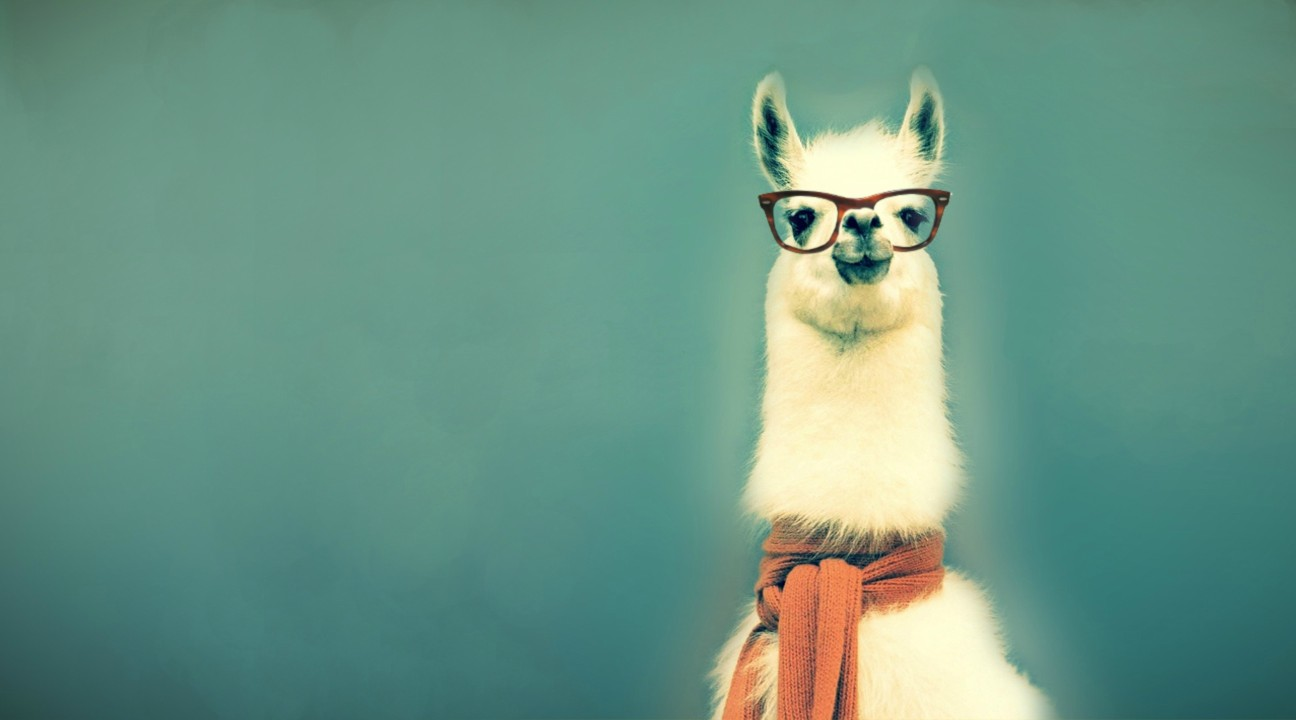 Image result for llama wearing glasses